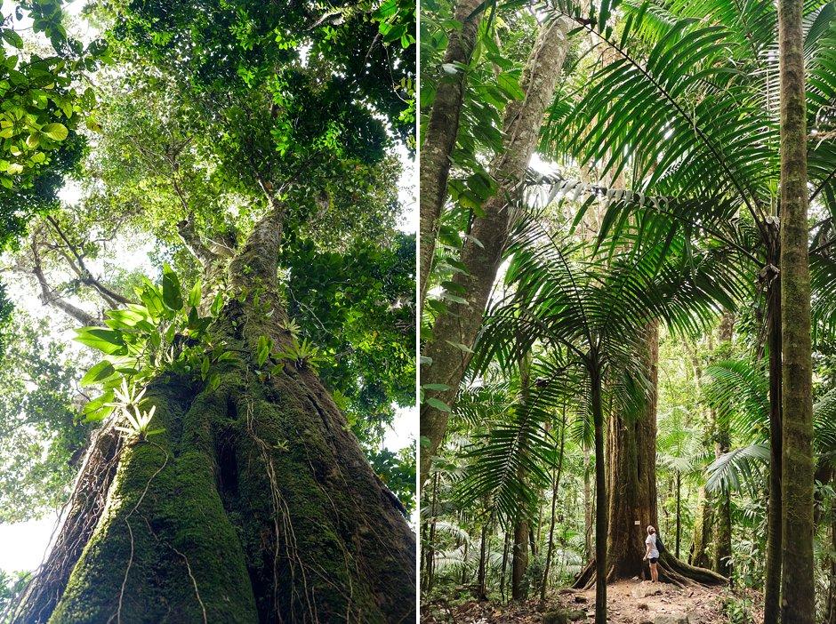 Puerto Rico Trip El Yunque Rain Forest